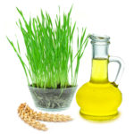 wheat grass and wheat germ oil isolated on white